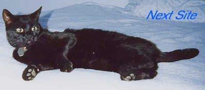 Next Black Cat Ring Site!